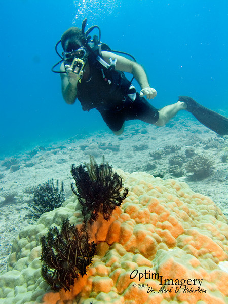 """We did this dive out on the western """"flat,"""" as opposed to heading north to the Canyon.  Here you see Bill studying some crinoids (also called """"feather stars,"""" Comantheria briareus)."""