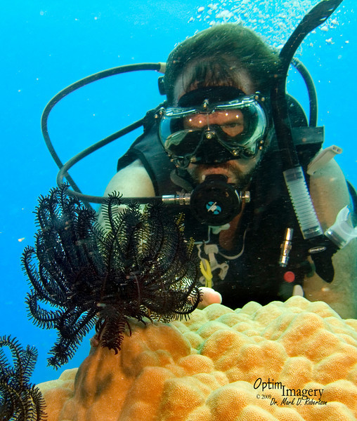Or maybe the crinoids are studying Bill?