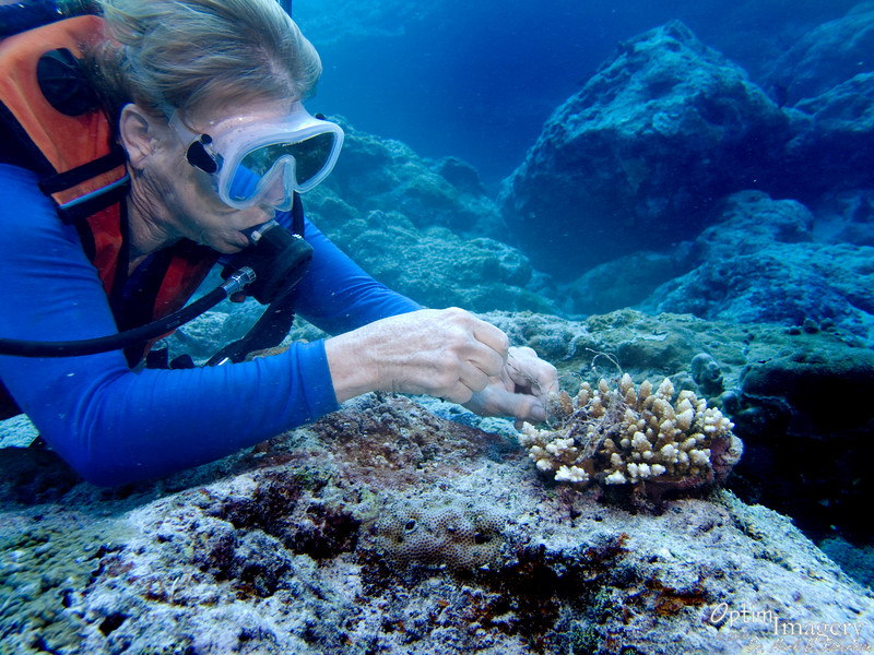 After most everyone else had left the water, Mary spent some time cleaning up some of the fishing trash which was choking the coral.