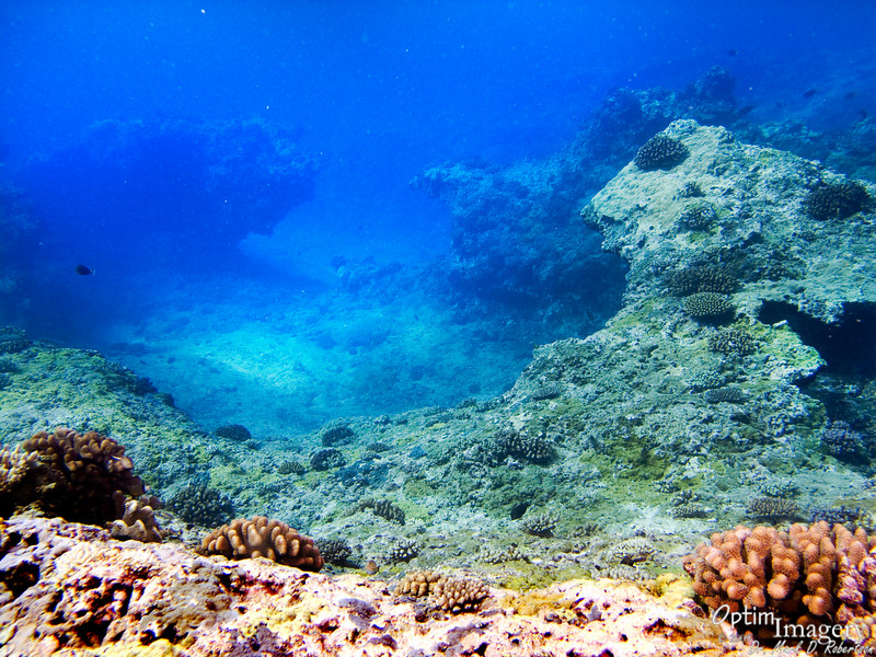 Part of the landscape which makes the shallows at Wing so cool!