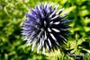 FLOWER.  MANITO PARK, SPOKANE, WA