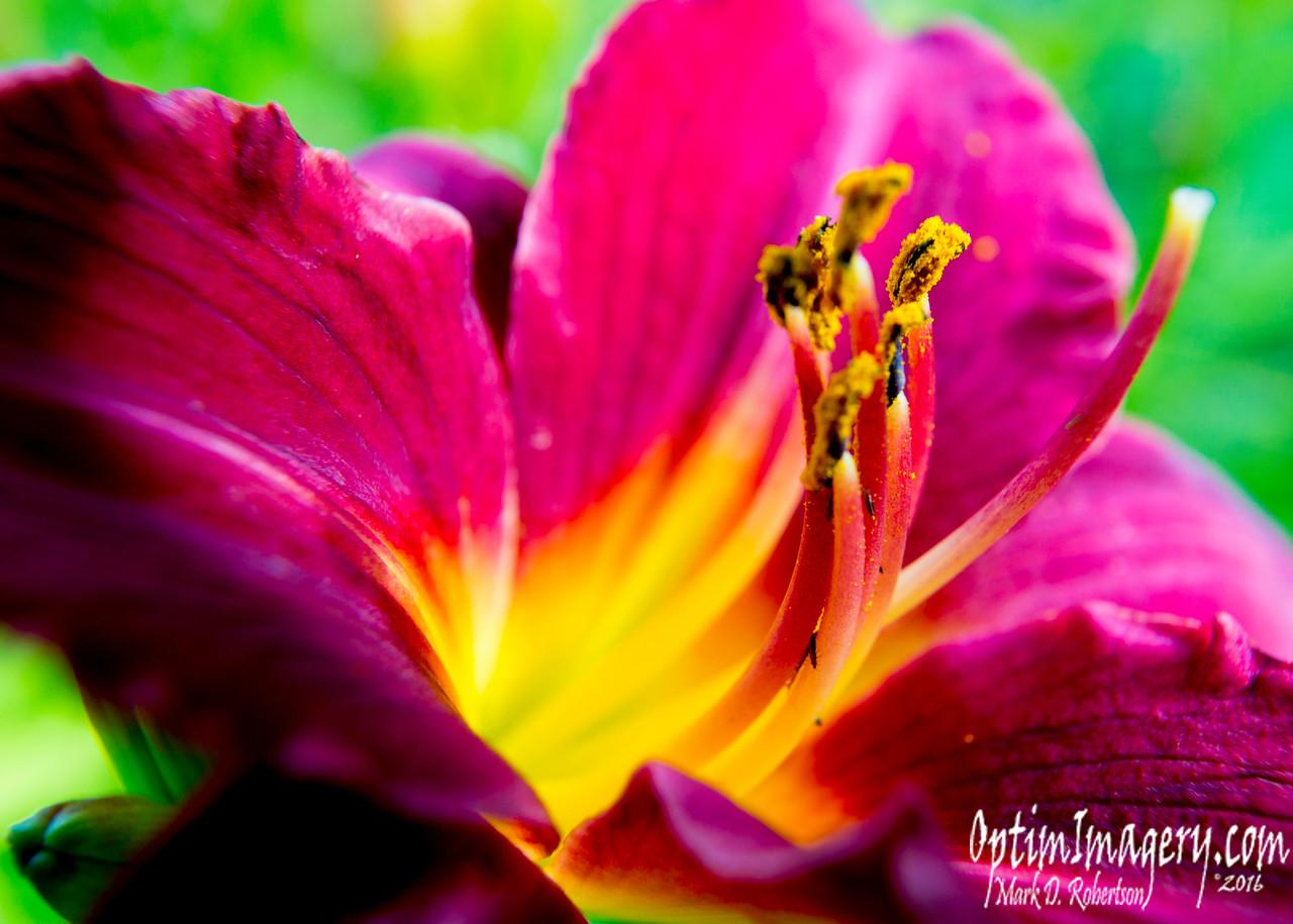 MORE FLOWER PORN