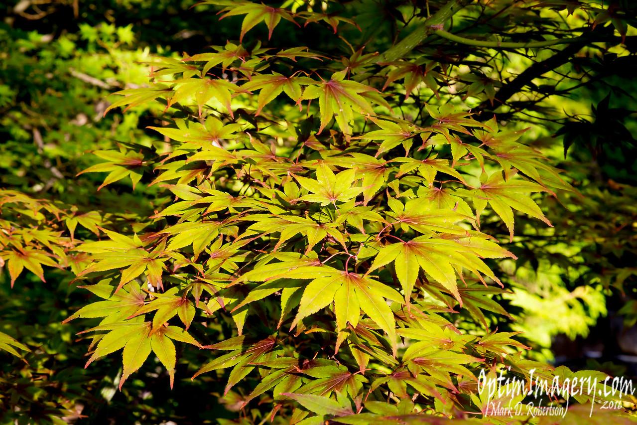 Nishinomiya Tsutakawa Japanese Garden, Manito Park, Spokane, WA.