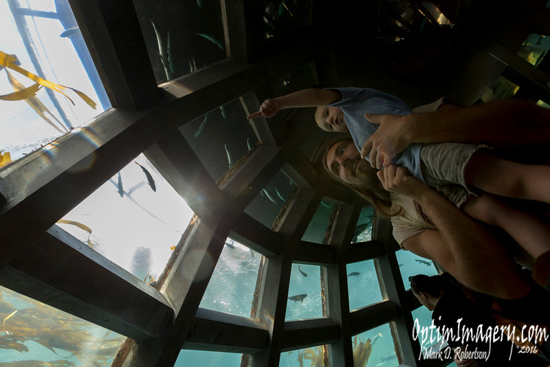 ZAC AND RIO IN SEATTLE AQUARIUM'S UNDERWATER DOME