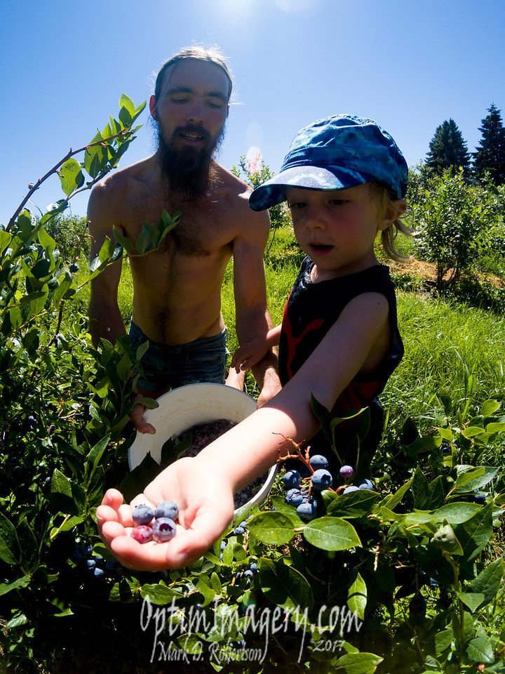 U-PICK BLUEBERRIES!