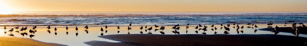 SUBLIMELY STATUESQUE SEAGULLS SERENELY STANDING STILL IN THE SUPERBLY STUNNING SEA SHORE SUNSET