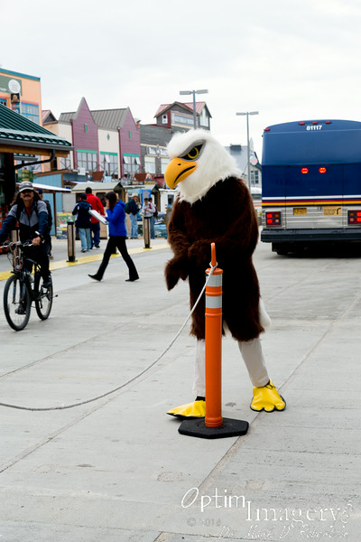Upon de-boarding, we are met by an eagle.  I had actually been surprised up until this time at how few eagles we had seen.