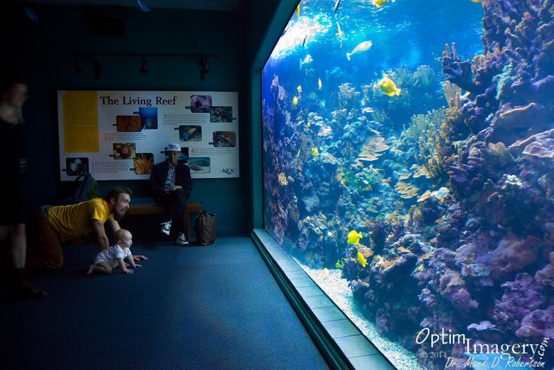 Zac helps Rio to discover the Maui Aquarium.