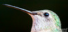 Have you ever seen the trees and sky reflected in the eye of a hummingbird before?