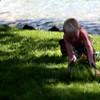 VIDEO:  ONE DETERMINED KIDDO!