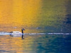 CANADA GOOSE ON JOLANDA LAKE