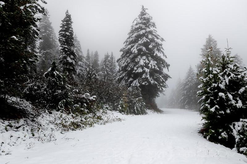 WINTER WONDERLAND: MOUNT SPOKANE