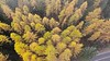 VIDEO: IN THE CLOUDS ABOVE THE LARCH TREES