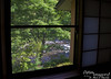 "Back at Annex Turtle Hotori-an.  This is the view out my window.  Notice the river.  VERY nice, gentle ""roar"" of water:  Quite nice to sleep to!"