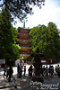 """FIVE-STORIED PAGODA  and Nikko Toshogu.<br /> <br /> The previous gallery from this trip ( <a href=""""http://www.optimimagery.com/TRAVEL2013/JUNE-2013-NIKKO-JAPAN/NIKKO-I/29904637_GJvwCx"""">http://www.optimimagery.com/TRAVEL2013/JUNE-2013-NIKKO-JAPAN/NIKKO-I/29904637_GJvwCx</a> ) showed the shrine of  Tokugawa Iemitsu, the THIRD Tokugawa Shogun (1604 - 1651).  Most of the current gallery shows the Toshogu Shrine and area, which enshrines Tokugawa Ieyasu (1543-1616), the first Shogun to unify Japan and usher in the Edo Period (also Iemitsu's grandfather).<br /> <br /> A pagoda was built here to honor Tokugawa Ieyasu 33 years after his death, but that structure burned in 1815.  The current structure was built in 1819, and still looks to be in great condition.<br /> <br /> The inside of this structure is hollow, with a massive central suspended pillar hanging from the 4th floor and extending to within about 10 cm of the ground.  This design has allowed the Five-Storied Pagoda to weather earthquakes exceedingly well, and such hanging weights are used today to stabilize some modern tall structures, including the Tokyo Sky Tree (completed in 2012).<br /> <br /> I can understand how the hanging weight can stabilize such a structure against earthquakes, but I will quote from Japanese sources one thought which I do not totally understand (quoted word for word):  """"The central pillar of the pagoda is interesting, in that it is suspended , hanging on wire ropes from the 4th story.  This was done to prevent for the pillar to punch through the roof even if the height of the pagoda were to shrink over its long life.""""<br /> <br /> Now, why would they think this structure would shrink so much?  Did they use green wood which they thought would shrink as it dried?  If so, it seems that it would be cracking and would be in terrible condition (I walked around it -- no sign of any such problems).  Do tall wooden structures tend to shrink that much?  I can't seem to find anyplace online anyth"""