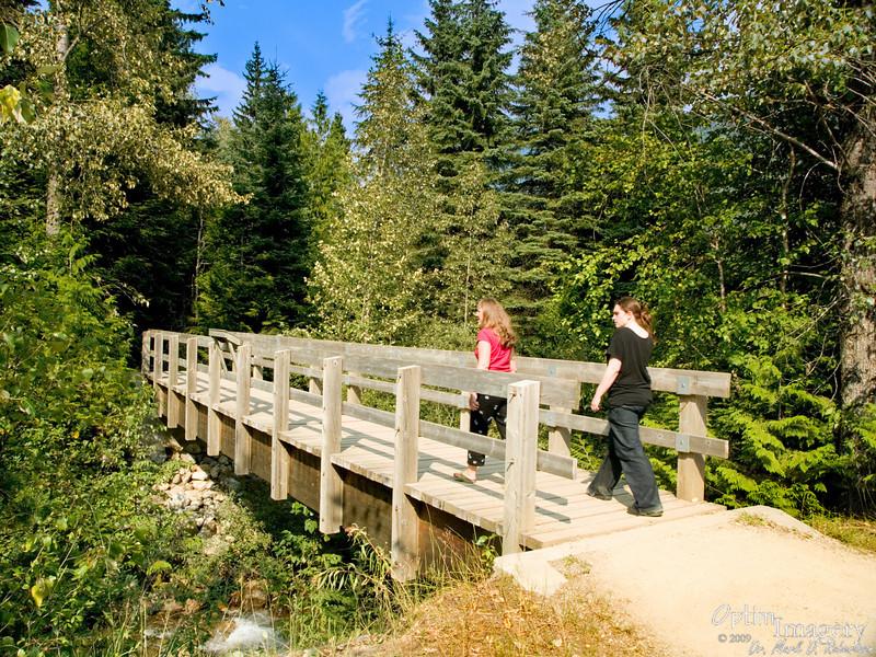 Skunk Cabbage Board Walk along the Illecillewaet River in Mount Revelstoke National Park.