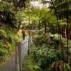 You can see what kind of foliage is possible in places where it rains, at least for a while, on 70% of the days.  We are walking to Thurston Lava Tube.