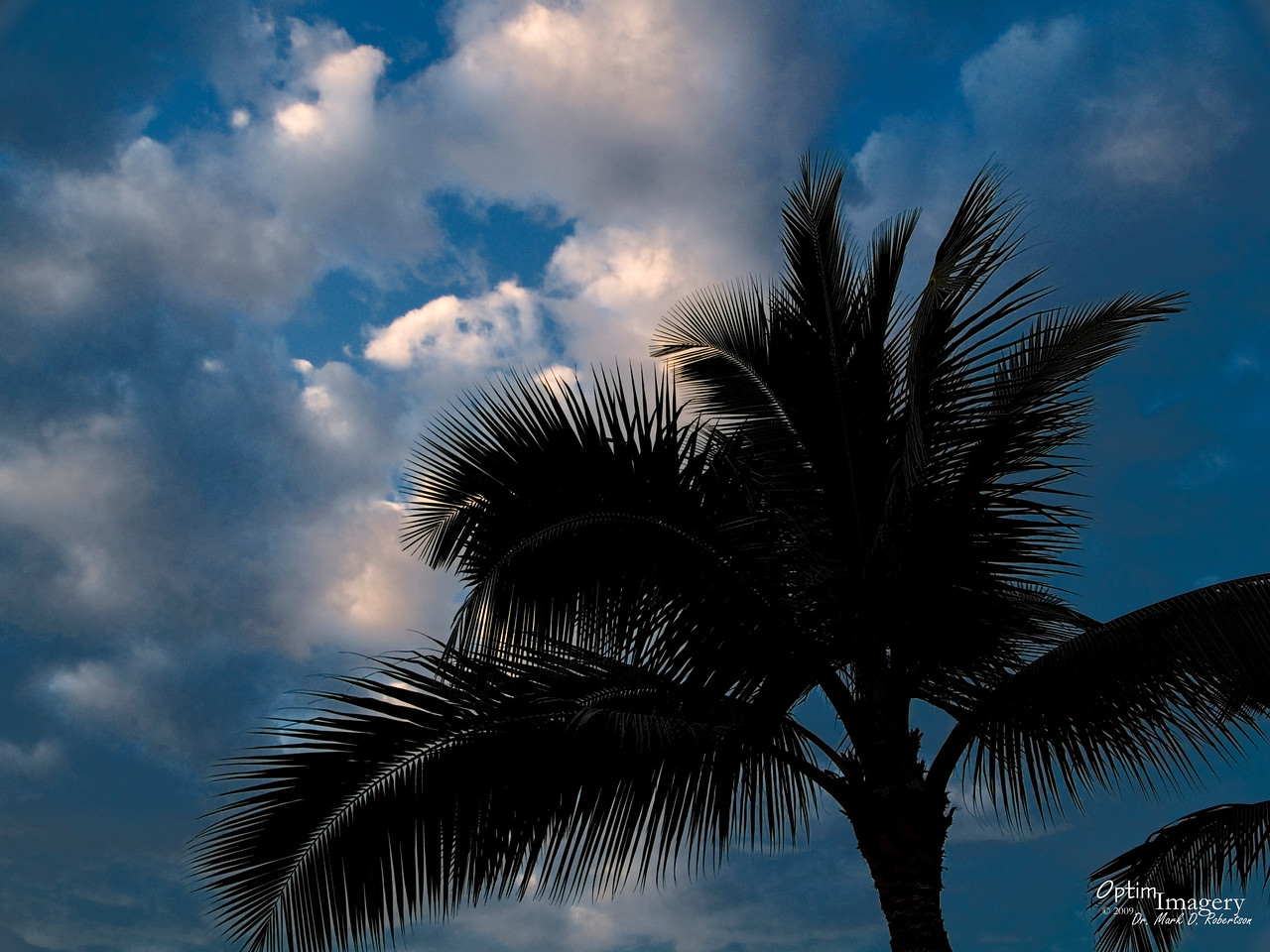 Coconut tree and sky at Kona Airport as we await our flight.