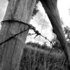 Same old corner post and wire on lava, different angle, in B&W.
