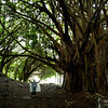 Large banyan trees are so amazing.  Gotta love that parka, Bev!