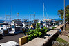 Lahaina Harbor as we wait to for a Pacific Whale Foundation tour boat.