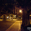 Banyan Tree Park, in downtown Lahaina.  An 8 foot tall banyan tree from India was planted here in 1873.  It is now 60 feet tall, has several trunks (many trunks, all the same tree), and shades 2/3 of an acre.
