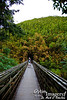 The trail traversed in a couple of places over a deep valley.  That's all bamboo behind me.