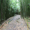 Bamboo forest.  In the scene where Bev starts playing with the bamboo, notice how TALL the stuff is.  Hard to believe this is actually a type of grass.  Hope no one mows it while we are there!
