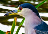 """Gotta love that red iris with blue feathers!<br /> <br /> Join us in the next album, as we head to Big Island!<br /> <br /> For on the Wailea Beach Marriott, click on the following:    <a href=""""http://www.marriott.com/hotels/travel/hnmmc-wailea-beach-marriott-resort-and-spa/"""">http://www.marriott.com/hotels/travel/hnmmc-wailea-beach-marriott-resort-and-spa/</a><br /> <br /> For the next gallery, click below:<br /> <br /> <a href=""""http://www.optimimagery.com/THIS-IS-ME-Vacations-around-Sa/Travel/JANUARY-AND-FEBRUARY-2010/JAN-31-2010-HAWAII-VOL-V/"""">http://www.optimimagery.com/THIS-IS-ME-Vacations-around-Sa/Travel/JANUARY-AND-FEBRUARY-2010/JAN-31-2010-HAWAII-VOL-V/</a>"""