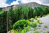 Starting up the Million Dollar Highway, from Durango to Silverton.  Bri captures some flower shots.