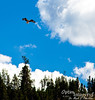 Then it was on to Midway Geyser Basin, where this osprey put on quite a show.