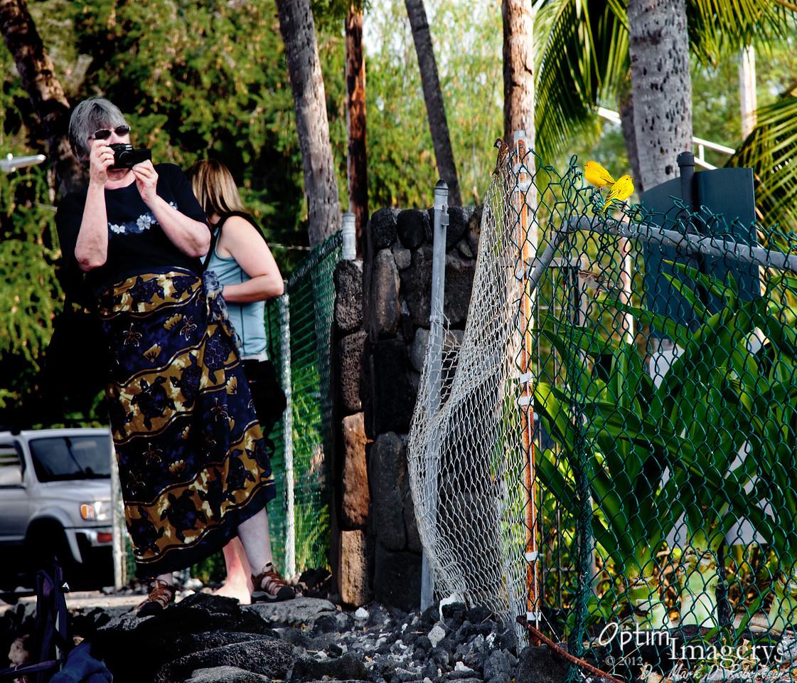 Marsha photographing some yellow birds at Kahaluu Beach Park.