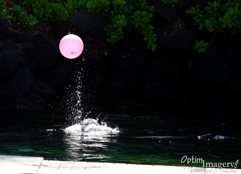 """And it does look like their dolphins enjoy themselves in games like """"toss the ball."""""""
