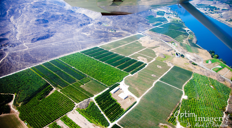 Orchards (and there may be some vineyards, too) along the Columbia River.