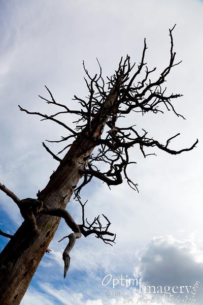 Viva dead trees!