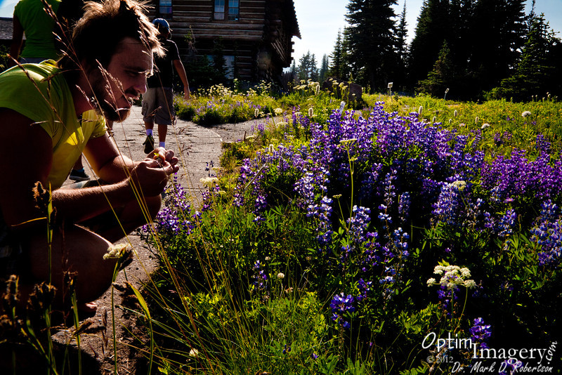 At the parking area at Sunrise (I'm referring to a location, not the time of day).  Zac is looking at some Lupine.