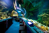 The main attraction of UNDERSEA WORLD is a 300+ foot clear acrylic tunnel through an 800,000-gallon saltwater aquarium.