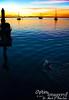 Swimming toward the sunset.