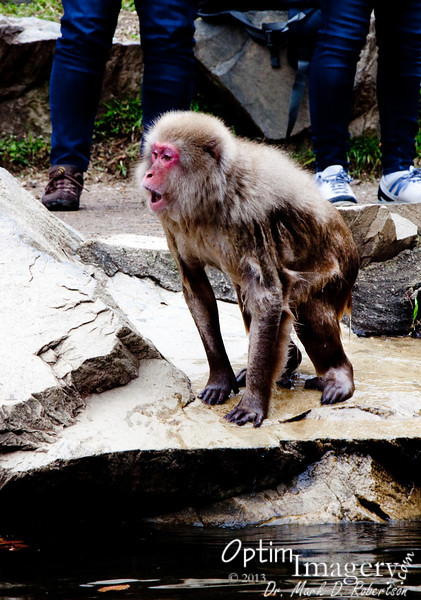 Another wet monkey, excited about something.