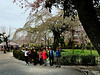 We were welcomed when we did find our way to Maruyama Koen. Created in 1886, this is the oldest city park in Kyoto. It is also THE most popular spot for hanami, as you will see in the ensuing photos!