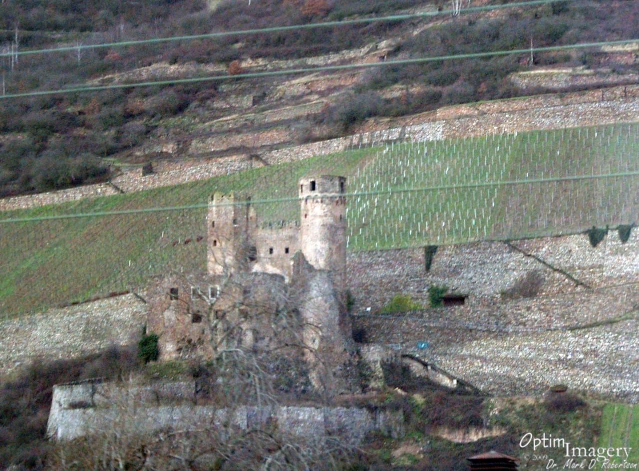 Vintage castle and vinyards