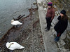 Bev. Bri, and 2 swans. I'll leave it to you to figure out which are which.