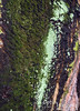 Tree bark, lichen, and moss.