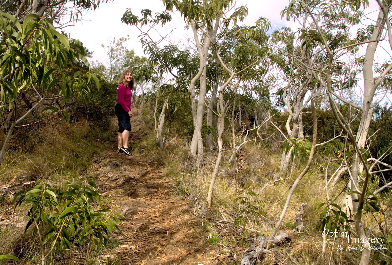 Bev is heading up the trail.  Just another 7.5 miles (and a gain of about 7,000 feet in elevation) would get her up to the rim of the Mauna Loa crater.  I've heard that it is a rather challenging trail.  Guess we better head back to Kona instead.....