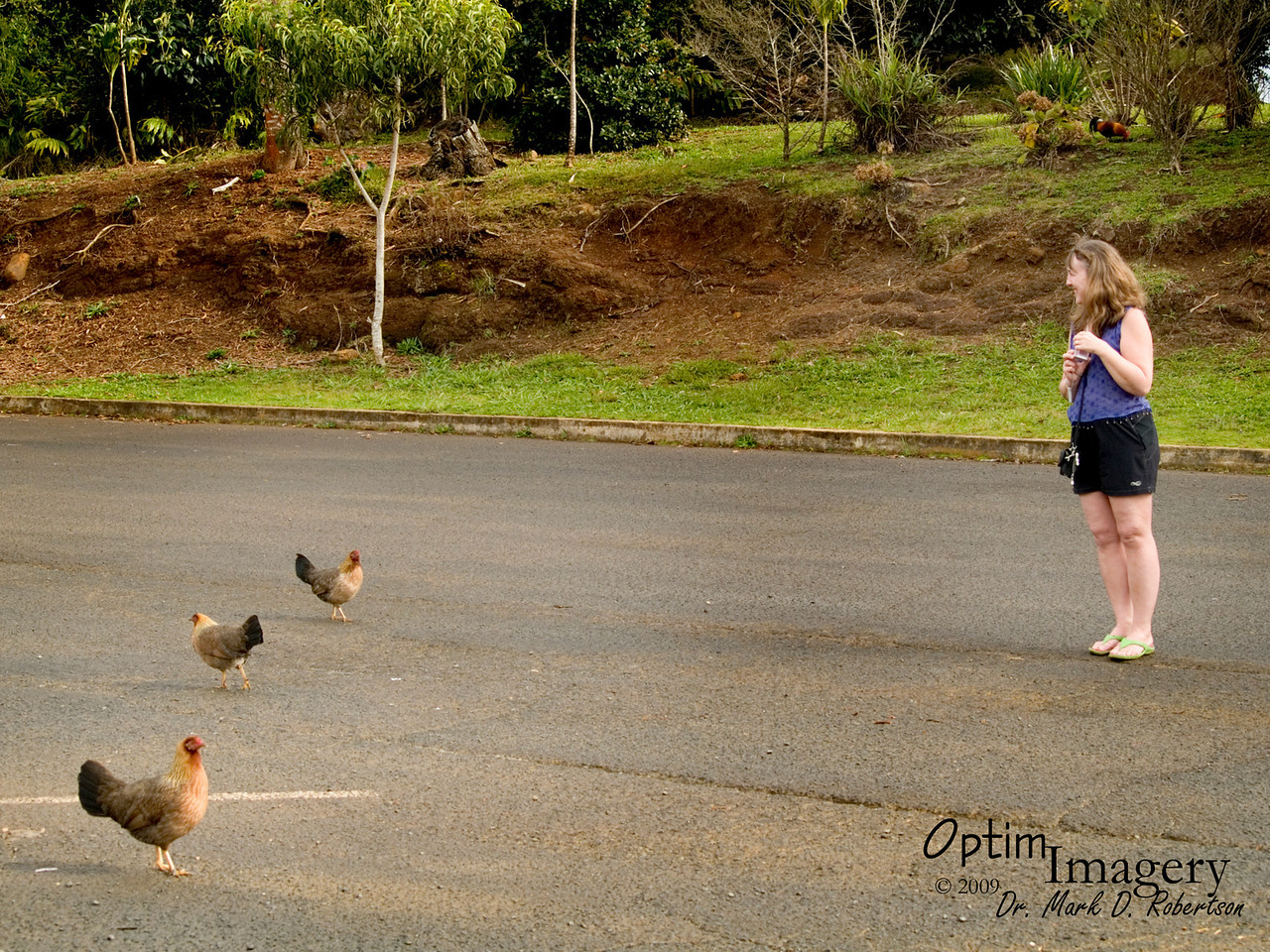 Photographic PROOF that, when given a choice, two out of three hens will face Bev.