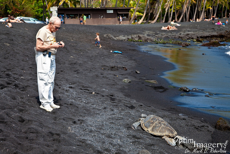 Dad investigates a sleeping Green Sea Turtle (local name Honu).  I have read that the southern Hawaiian Islands comprise the only place in the world where these turtles regularly choose to sleep on the shore.
