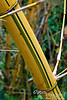 Love the Zen of wild bamboo.