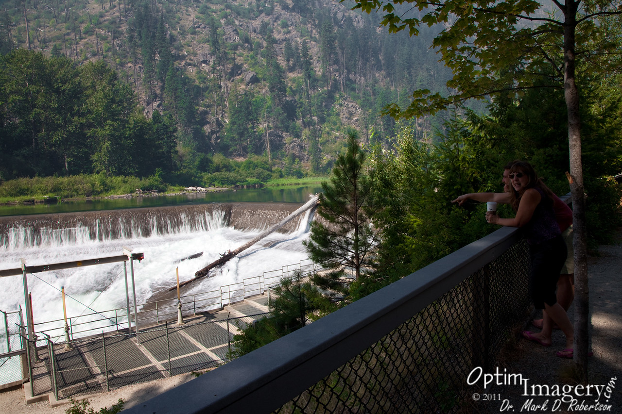 Tumwater Dam.  Every once in a while we would see a salmon jump.  You can see a fish ladder in the foreground, but many of the salmon attempt to go directly over the dam.  I don't know if they ever make it or not, but it's my understanding that they can jump up some pretty amazing falls.<br /> <br /> Seems like there almost always is one large log that recently washed most of the way over the dam (a different log each time I come by).  But I have never seen one in the action.