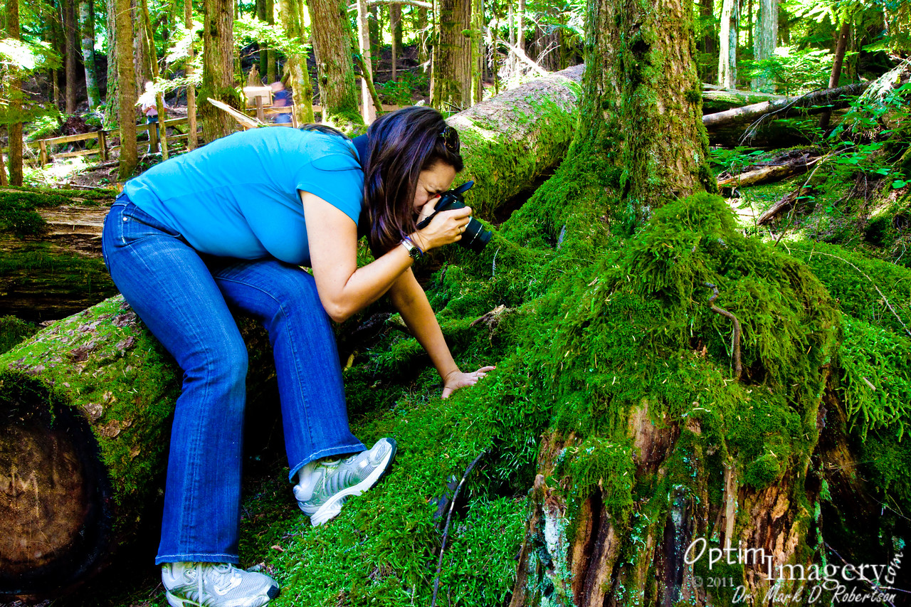 All sorts of organisms, including comfortably soft moss, grow lushly in this moist forest ecosystem.