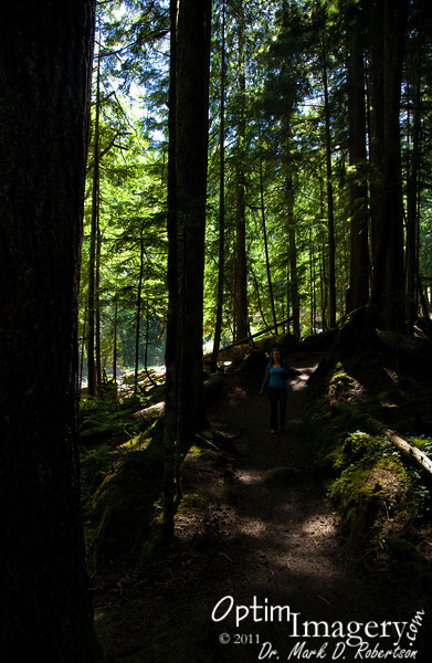The grounds around Deception Falls have been developed enough to allow easy access down a fairly extensive nature-walk trail system.